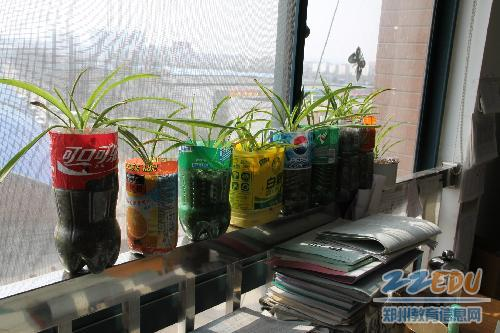 物理组老师用废弃的饮料瓶,洗洁精瓶做成花盆.图片